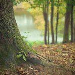 El Tejo, árbol de la vida, la muerte y la eternidad